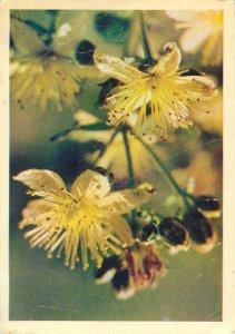 Flowers nature yellow Postcard