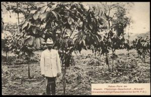 Germany 1909 Kamerun Bibundi Plantation Postcard PPC  Used Hamburg 85092