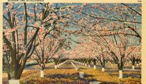 CA - Blossom Time