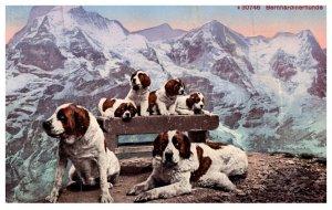 Dog , Saint  Bernard ,   adults and puppies , mountains