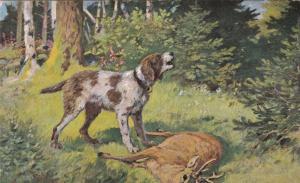 Hunting dog & deer, 1901-07