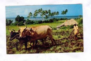 Farming, Fiji, Pu-1956
