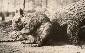 RP; Squirrel closeup , 20-30s