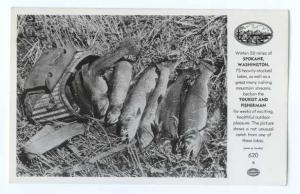 RPPC of a Trout Catch from a Lake near Spokane, Washington, WA
