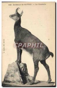 Old Postcard Savoy Chamois