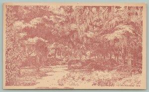 Orangeburg South Carolina~Edisto Gardens~Forest~c1950 Postcard