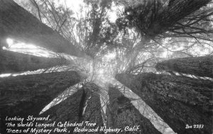RPPC Cathedral Tree, Trees of Mystery Park Redwood Hwy Zan Photo c1940s Postcard
