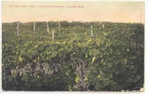 Wm F. Halstead's Vineyard, Lawton , Michigan, PU-1908