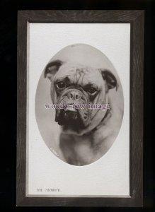 an0328 - Dogs - An Admiral Bulldog - Rotary Opalette Series postcard