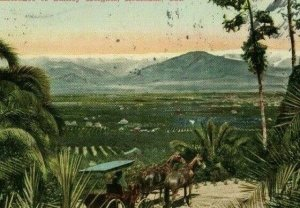 Postcard 1913 View- Horse Carriage on Entrance to Smiley Heights,Redlands, CA.T8