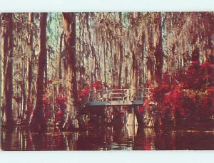 Pre-1980 BRIDGE IN SWAMP AT CYPRESS GARDENS Charleston South Carolina SC t5362