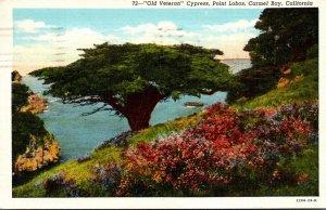 California Carmel Bay Point Lobos Old Veteran Cypress 1942 Curteich