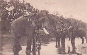 Ceylon Sri Lanka Elephants In River Fine Tuskers