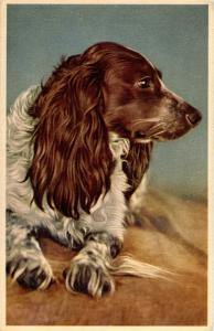 Dog -  German Longhaired Pointer