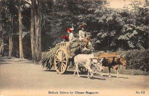 Singapore Bullock Driven by Chinese Singapore Postcard
