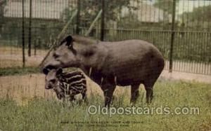 South American Tapir & Young, New York Zoological Park New York, USA Unused