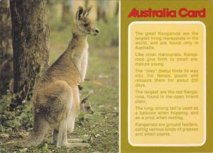 Kangaroos, Australia,   50-70s