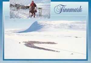 Norway Finnmark Reindrift Herd Of Reindeer