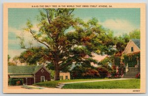 Athens GA~Colonel William H Jackson's Beloved Tree~Owns It's Own Land~1940 Linen