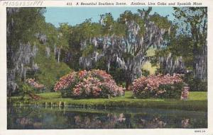 A Beautiful Southern Scene, Azaleas, Live Oaks & Spanish Moss, Mississippi, 1...