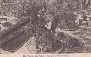 JERUSALEM , Israel , 00-10s ; Garden of Gethsemane : The Tree of the Agony