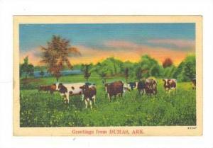 Cows in pasture, Greetings from Dumas,  Arkansas, PU-1942