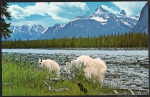Alberta Athabaska River with the Peaks of Jasper National Park Goats 1950s-1970s