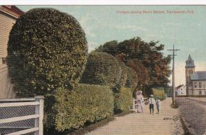 Hedges along Main Street, Yarmouth, N.S., Canada, 00-10s