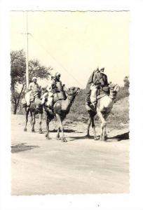RP; Karachi - Camels ; Pakistan, 1950s