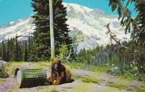 Washington Mt Rainier National Park Black Bear