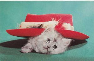 Kitten In Hat - Try this one for size - Cat - Animal Humor