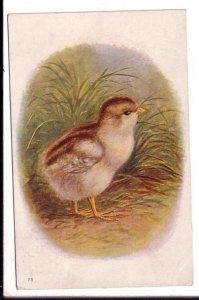 Brown Baby Bird, National Art, Used Amherst Nova Scotia, 1907