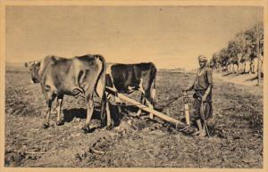 EGYPT: Fellah ploughing with oxen, 10-20s