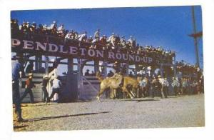 Hard- riding cowboys try their luck at astride pitching ponies at Pendleton, ...