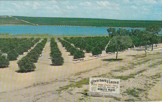 Oranges Governor's Grove Highwau U S 27 Clermont Florida