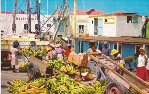 Unloading Bananas , BRIDGETOWN , Barbados , 1977