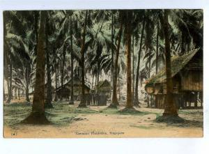 192135 SINGAPORE Cocoanut Plantation Vintage postcard
