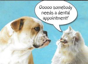 US #4387  Polar Bear.  Schedule your Dental Appointment.  Cute picture