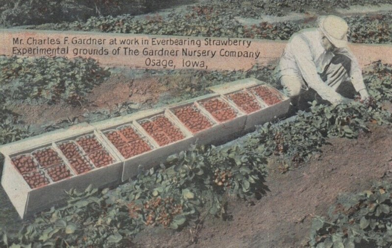 OSAGE, Iowa, 1900-1910's; Grounds of the Gardner Nursery Company