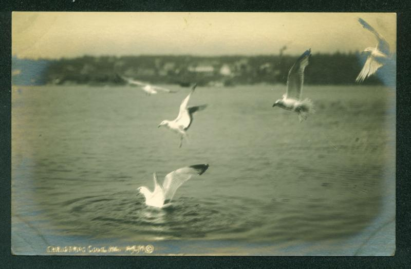 Seagulls CHRISTMAS COVE MAINE Scene Vintage RPPC Real Photo Postcard