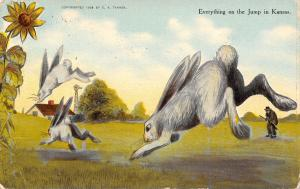 Wichita (Cancel & Publ) Exaggerated Rabbits Get Jump on A Hunter~Sunflower c1910