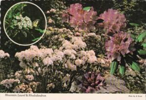 Flowers Mountain Laurel & Rhododendron