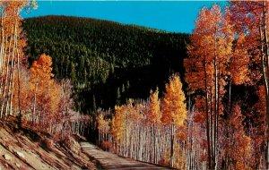 Autumn Aspen Trees Rocky Mountains Colorado CO Postcard