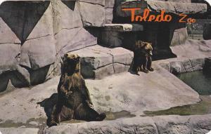 Kodiak bears,Toledo Zoo, Toledo, Ohio,40-60s