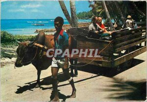 Modern Postcard Ox Cart La Digue Seychelles