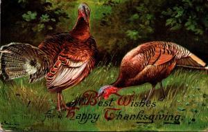 Thanksgiving With Turkeys 1909