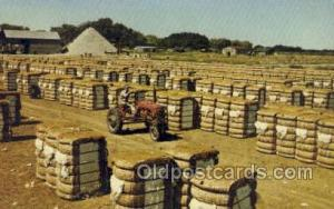 Bales of Cotton Farming Old Vintage Antique Postcard Post Card  Bales of Cotton