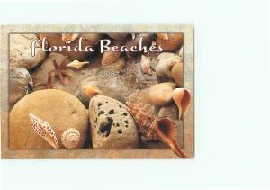 Vintage Postcard Greetings Beaches Shells Starfish Clams Sand   Florida  # 3093