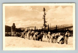 RPPC of Siberian Sled Dogs Postcard