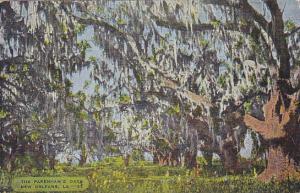 The Pakenham's Oaks New Orleans Louisiana